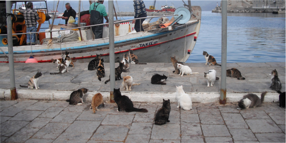 Cats Hydra Harbor Fishing Boat